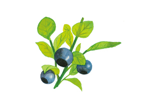 Bilberry leaf extract